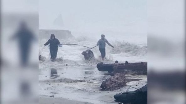 Inseguiti dalle onde: la passeggiata con i cani diventa una fuga per salvarsi